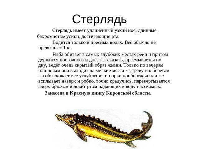 Стерлядь Водится только в пресных водах. Вес обычно не превышает 1 кг. Рыба о...