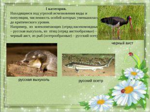 I категория. Находящиеся под угрозой исчезновения виды и популяции, численнос