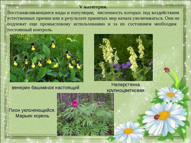 V категория. Восстанавливающиеся виды и популяции, численность которых под во...