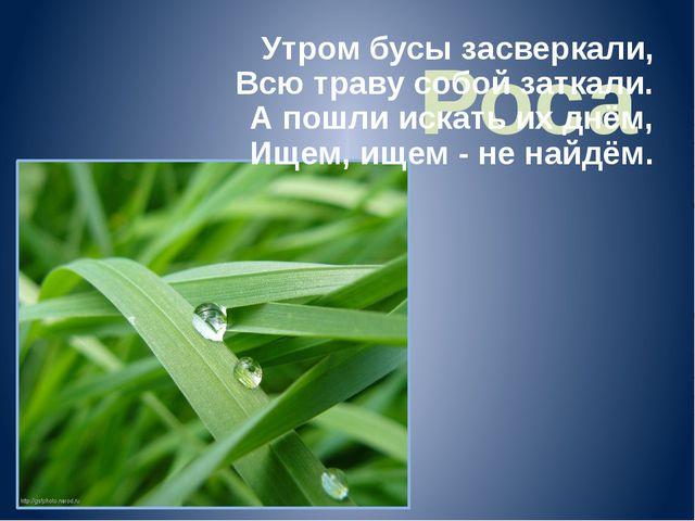 Роса Утром бусы засверкали, Всю траву собой заткали. А пошли искать их днём,...