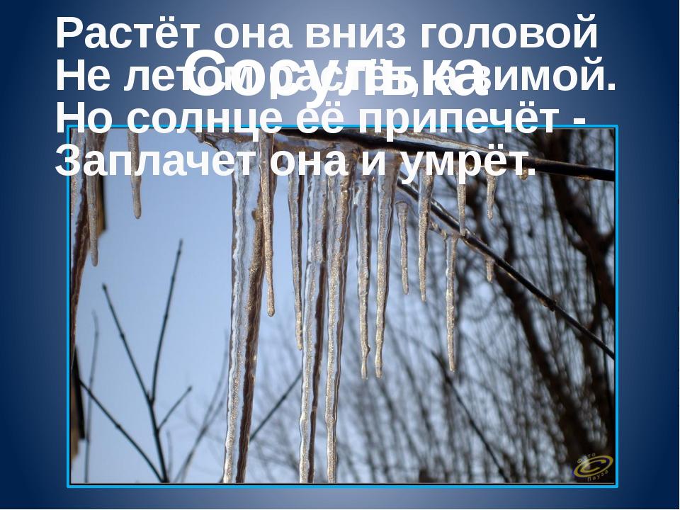 Сосулька Растёт она вниз головой Не летом растёт, а зимой. Но солнце её припе...