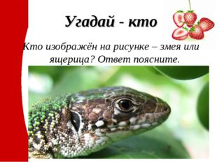 Угадай - кто Кто изображён на рисунке – змея или ящерица? Ответ поясните.