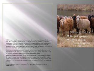 В 1985 году в хозяйстве совхоза «Камеликский» насчитывалось около 19000 голо
