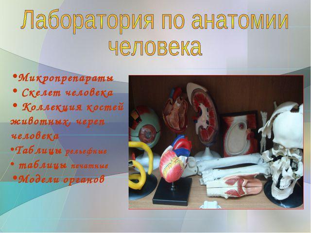 Микропрепараты Скелет человека Коллекция костей животных, череп человека Табл...