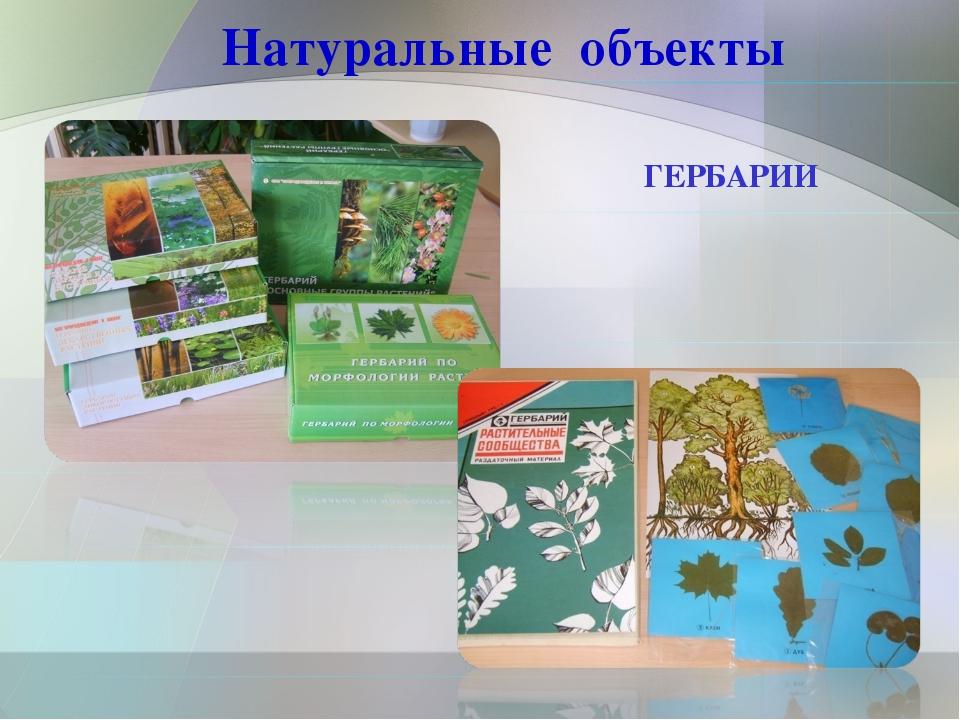 Натуральные объекты ГЕРБАРИИ