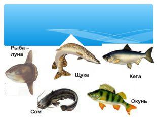 Рыба – луна Щука Кета Сом Окунь