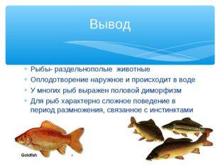 Рыбы- раздельнополые животные Оплодотворение наружное и происходит в воде У м