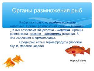 Рыбы, как правило, раздельнополые животные. Органы размножения самок – яични
