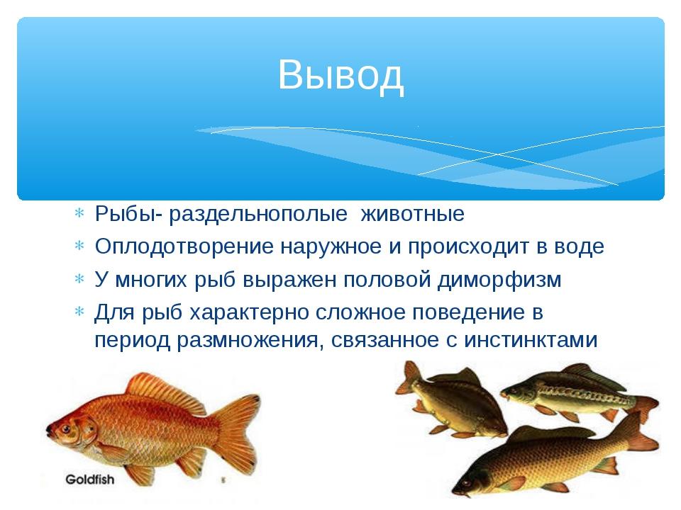 Рыбы- раздельнополые животные Оплодотворение наружное и происходит в воде У м...
