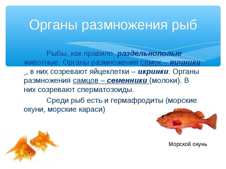 Рыбы, как правило, раздельнополые животные. Органы размножения самок – яични...