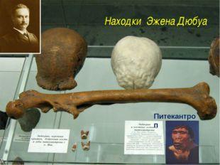 Находки Эжена Дюбуа Питекантроп http://antropogenez.ru/uploads/tx_antropedia/