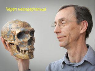 Череп неандертальца http://www.factruz.ru/history_mistery/images/neanderthal_