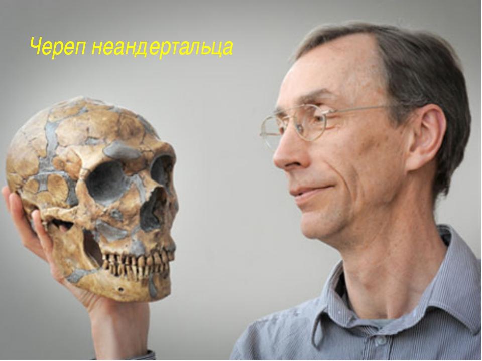 Череп неандертальца http://www.factruz.ru/history_mistery/images/neanderthal_...