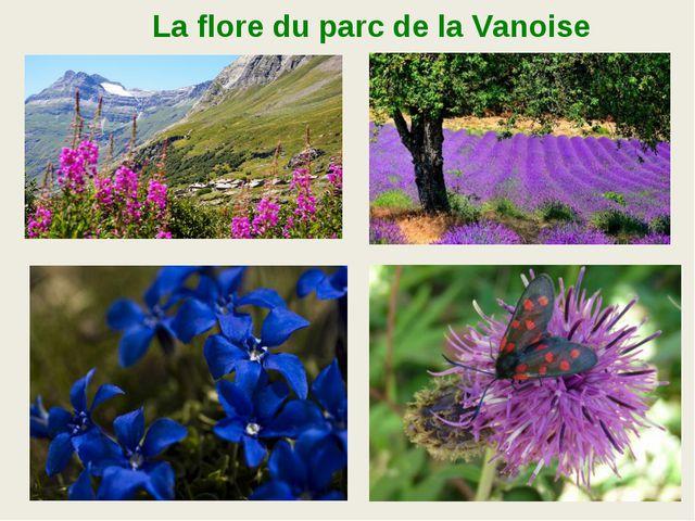 La flore du parc de la Vanoise