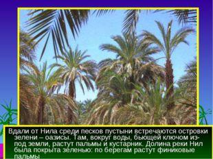 Вдали от Нила среди песков пустыни встречаются островки зелени – оазисы. Там