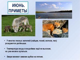 ИЮНЬ. ПРИМЕТЫ У многих лесных жителей (зайцев, лосей, волков, лис) рождаются