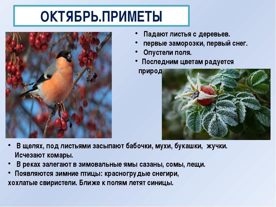 ОКТЯБРЬ.ПРИМЕТЫ Падают листья с деревьев. первые заморозки, первый снег. Опус...