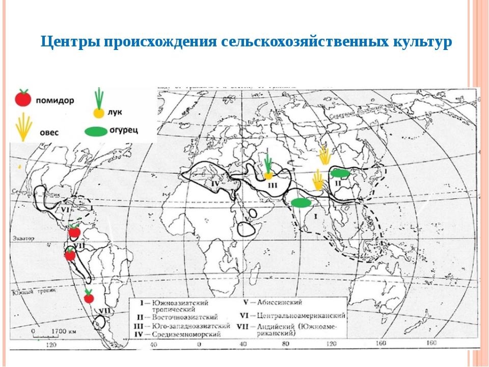 Центры происхождения сельскохозяйственных культур