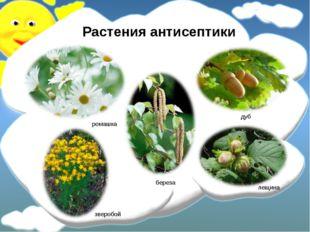 Растения антисептики ромашка зверобой береза лещина дуб
