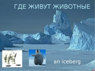 ГДЕ ЖИВУТ ЖИВОТНЫЕ an iceberg