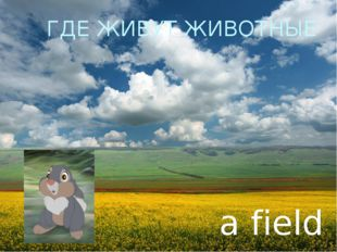ГДЕ ЖИВУТ ЖИВОТНЫЕ a field