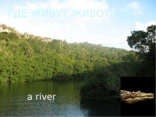 ГДЕ ЖИВУТ ЖИВОТНЫЕ a river