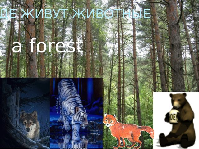 ГДЕ ЖИВУТ ЖИВОТНЫЕ a forest