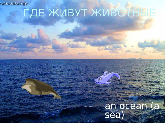 ГДЕ ЖИВУТ ЖИВОТНЫЕ an ocean (a sea)