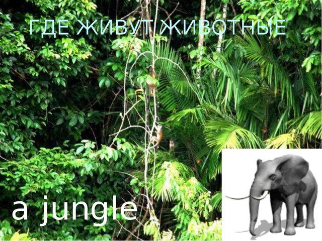 ГДЕ ЖИВУТ ЖИВОТНЫЕ a jungle