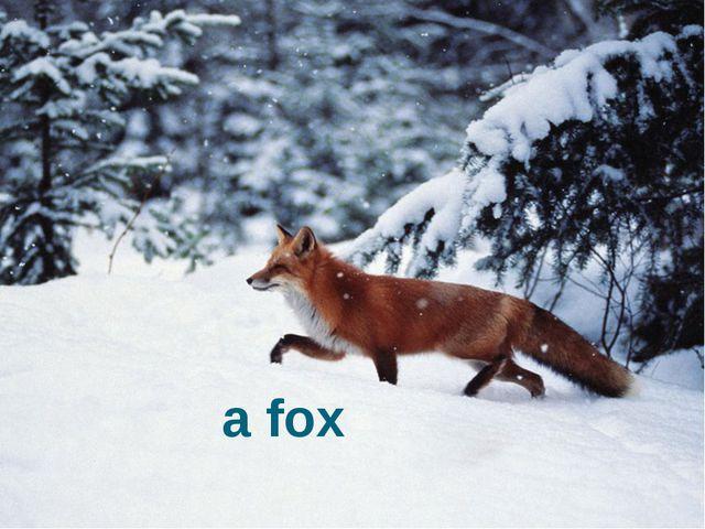 It's a fox. a fox