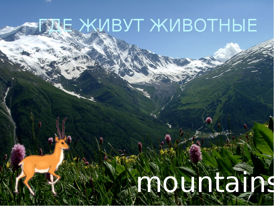ГДЕ ЖИВУТ ЖИВОТНЫЕ mountains