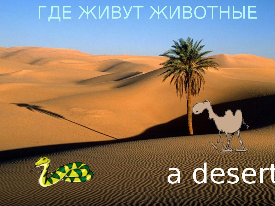 ГДЕ ЖИВУТ ЖИВОТНЫЕ a desert