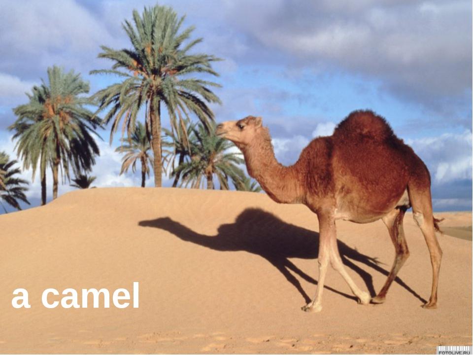 It's a monkey. a monkey a camel