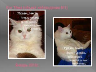Кот Тёма (объект наблюдения №1) Январь 2014г.