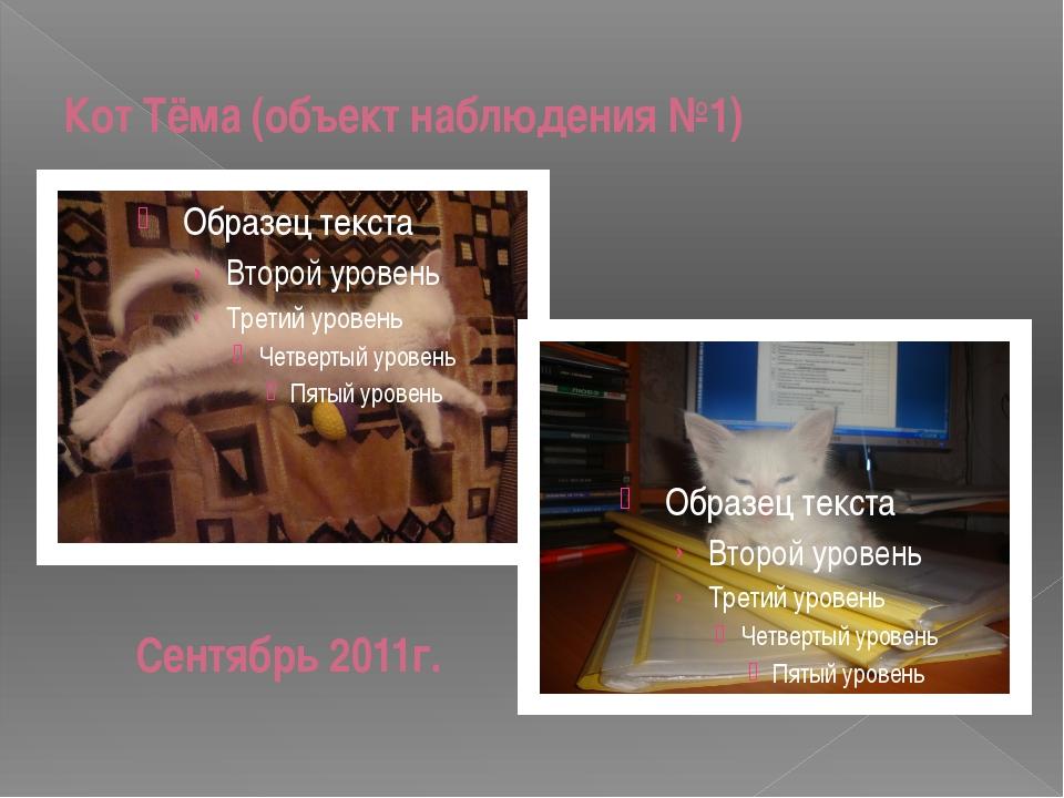 Кот Тёма (объект наблюдения №1) Сентябрь 2011г.