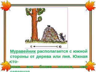 Муравейник располагается с южной стороны от дерева или пня. Южная сто- рона е