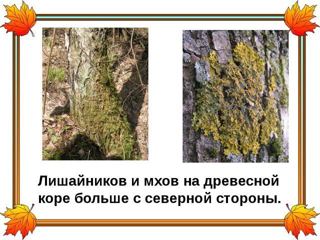 Лишайников и мхов на древесной коре больше с северной стороны.