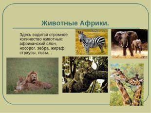 Животные Африки. Здесь водится огромное количество животных: африканский слон