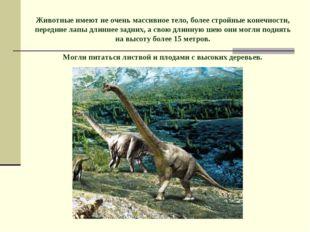 Животные имеют не очень массивное тело, более стройные конечности, передние