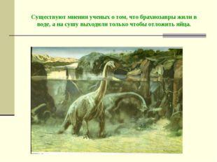 Существуют мнения ученых о том, что брахиозавры жили в воде, а на сушу выходи