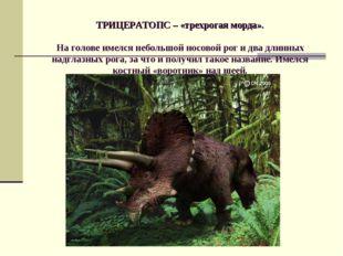 ТРИЦЕРАТОПС – «трехрогая морда». На голове имелся небольшой носовой рог и дв