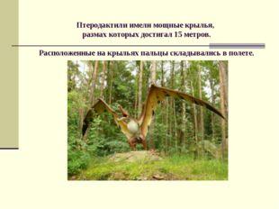 Птеродактили имели мощные крылья, размах которых достигал 15 метров. Располо