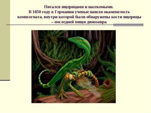 Питался ящерицами и насекомыми. В 1850 году в Германии ученые нашли окаменело