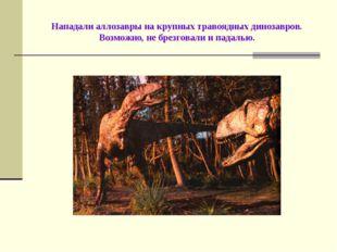 Нападали аллозавры на крупных травоядных динозавров. Возможно, не брезговали