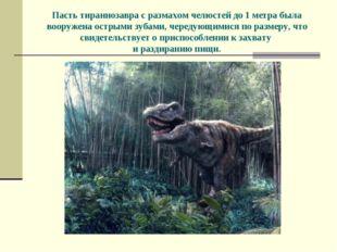 Пасть тираннозавра с размахом челюстей до 1 метра была вооружена острыми зуба