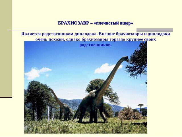 БРАХИОЗАВР – «плечистый ящер» Является родственником диплодока. Внешне брахи...