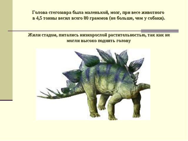 Голова стегозавра была маленькой, мозг, при весе животного в 4,5 тонны весил...