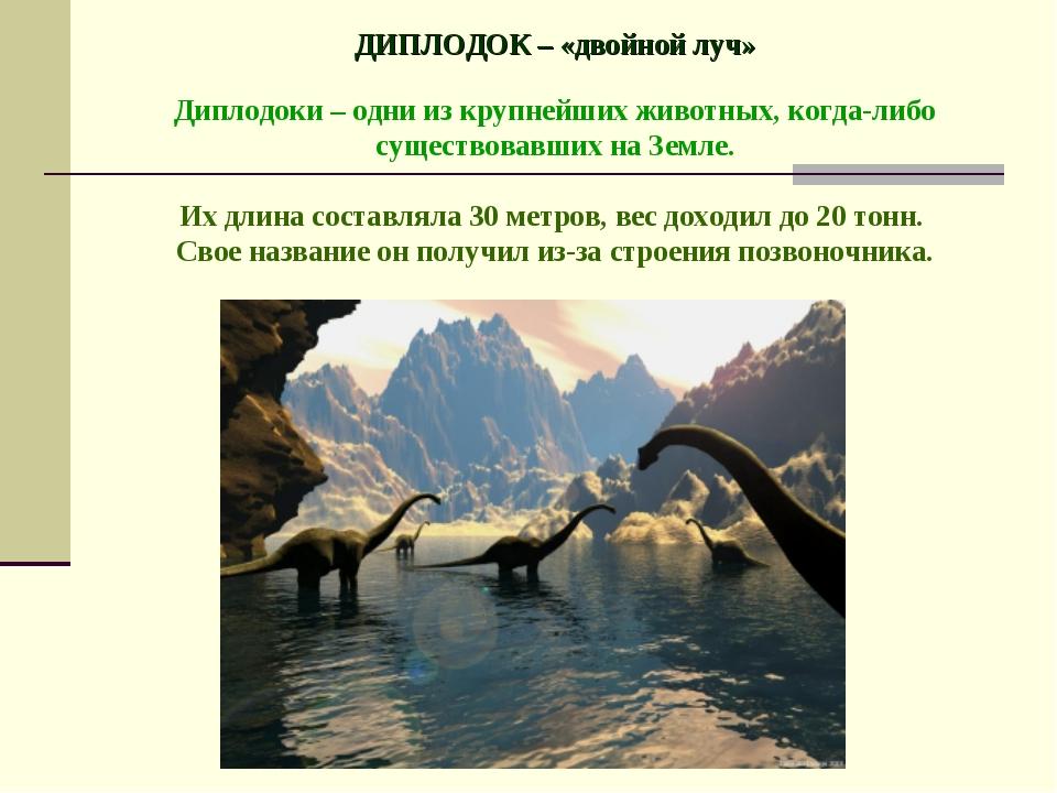 ДИПЛОДОК – «двойной луч» Диплодоки – одни из крупнейших животных, когда-либо...