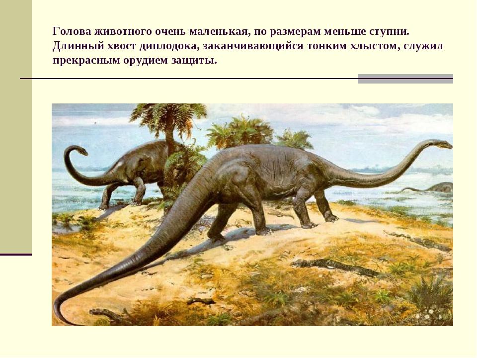 Голова животного очень маленькая, по размерам меньше ступни. Длинный хвост ди...