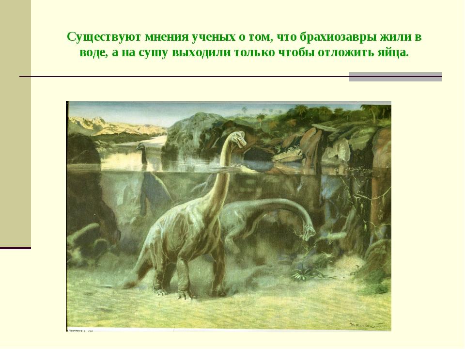 Существуют мнения ученых о том, что брахиозавры жили в воде, а на сушу выходи...